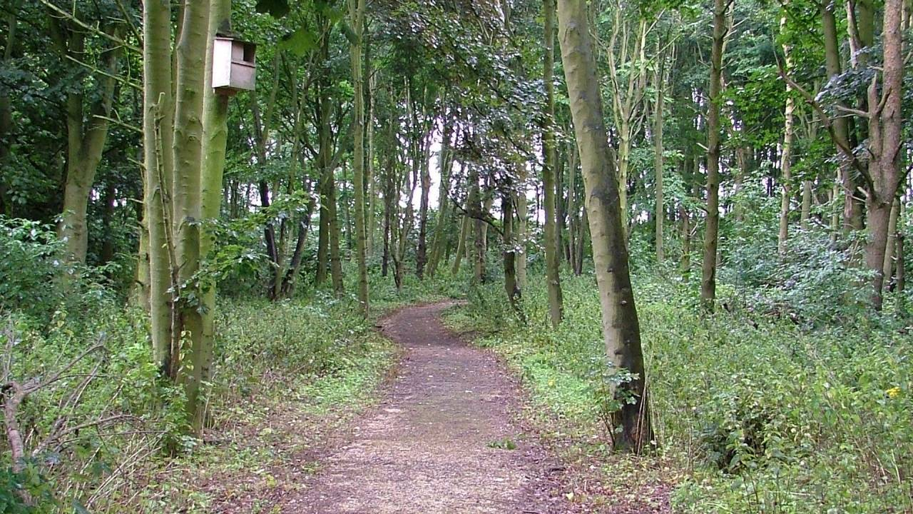 South Thoresby Warren Local Nature Reserve